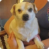 Adopt A Pet :: Cedrik - Salem, NH