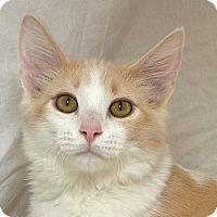 Adopt A Pet :: Bingo M - Sacramento, CA
