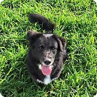 Adopt A Pet :: Fiona - Russellville, KY