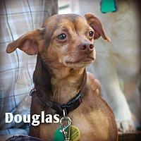 Adopt A Pet :: Douglas - Davenport, IA