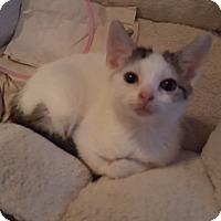 Adopt A Pet :: 1Brandy - Delmont, PA