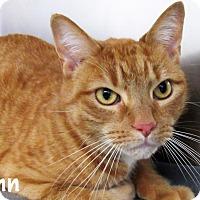 Adopt A Pet :: Finn - Jackson, NJ