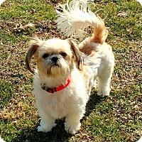 Adopt A Pet :: Abby - Hillsboro, IL