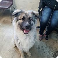 Adopt A Pet :: Alfie - Ogden, UT