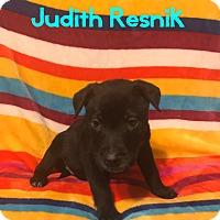 Adopt A Pet :: Judith Resnik - Garden City, MI