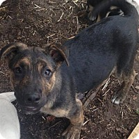 Adopt A Pet :: Quinten - Boston, MA