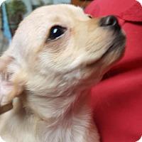 Adopt A Pet :: Claude - Tucson, AZ