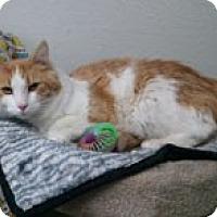 Adopt A Pet :: Miso - Anchorage, AK