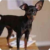 Adopt A Pet :: Gecko - Los Angeles, CA