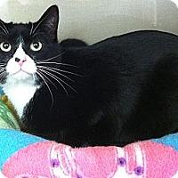 Adopt A Pet :: Carter - Riverhead, NY