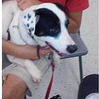 Adopt A Pet :: Cesar - Miami, FL