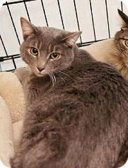 Domestic Shorthair Cat for adoption in Yorba Linda, California - Elsa
