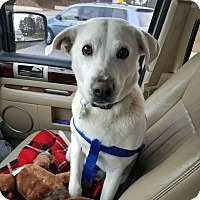 Adopt A Pet :: Judy - Alpharetta, GA