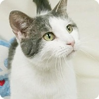 Adopt A Pet :: Chico - Kendallville, IN