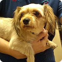 Adopt A Pet :: Gabby - Oviedo, FL