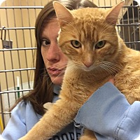 Adopt A Pet :: Ginger Hobbes - McDonough, GA