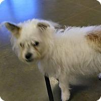 Adopt A Pet :: Gabby - Ogden, UT