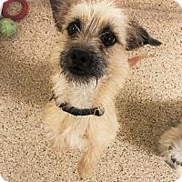 Adopt A Pet :: Sugar - Tempe, AZ