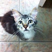 Adopt A Pet :: Pattycake - Madisonville, LA