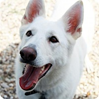 Adopt A Pet :: Bailey - Waco, TX
