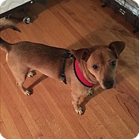 Adopt A Pet :: Cole-PENDING - Glastonbury, CT