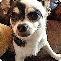 Adopt A Pet :: FURGUS - AUSTIN, TX