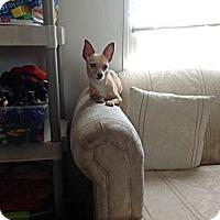 Adopt A Pet :: Abel - Milton, FL