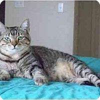 Adopt A Pet :: Panchita - Mesa, AZ