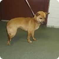 Adopt A Pet :: Mariah - Dundas, VA