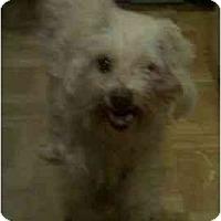 Adopt A Pet :: Elle - Phoenix, AZ