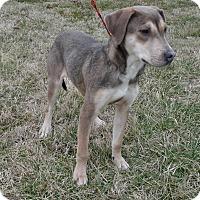 Adopt A Pet :: Demi - Bedminster, NJ