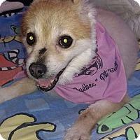 Adopt A Pet :: Lena - Pierrefonds, QC