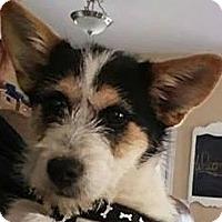Adopt A Pet :: Dexter - Lexington, KY