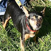 Adopt A Pet :: Peg's Allie - Carmel, IN