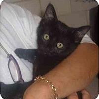 Adopt A Pet :: Madison - Bedford, MA