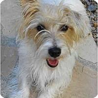 Adopt A Pet :: GRACIE LOU - Phoenix, AZ