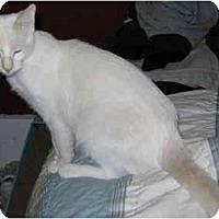 Adopt A Pet :: Ed - Davis, CA