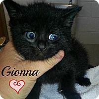 Adopt A Pet :: Gionna - Jacksboro, TN