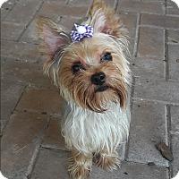 Adopt A Pet :: Penny - Riverview, FL
