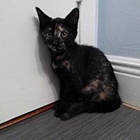 Adopt A Pet :: Gem - Miami, FL