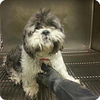 Adopt A Pet :: unknown - Upper Sandusky, OH