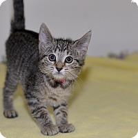 Adopt A Pet :: Riviera - Medina, OH