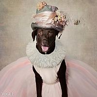 Labrador Retriever Mix Dog for adoption in El Dorado, Arkansas - Marley