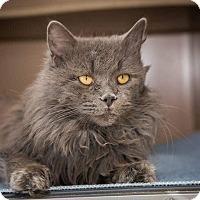 Adopt A Pet :: Armani - Madionsville, KY