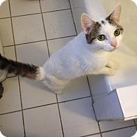 Adopt A Pet :: Anis - New  York City, NY