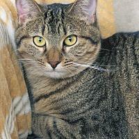 Adopt A Pet :: Florence - St Louis, MO