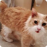 Adopt A Pet :: Sven - St. Louis, MO