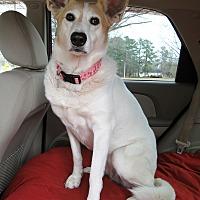 Adopt A Pet :: Heidi - Pretty and Sweet! - Zebulon, NC