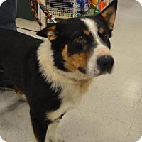 Adopt A Pet :: Tucker - Logan, UT