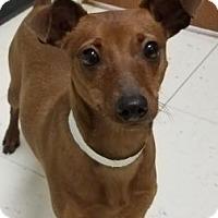 Adopt A Pet :: Ricky - South Amana, IA